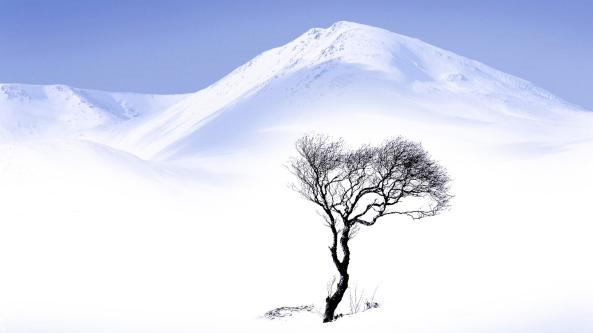 Lone-Tree-Surrounded-by-Snow-Landscape