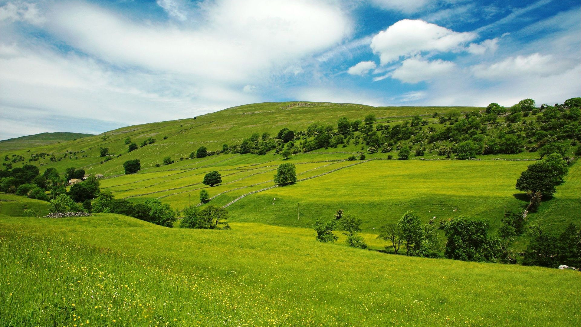 Amazing Wallpaper Home Screen Scenery - waste-green-landscape  Pictures_89766.jpg